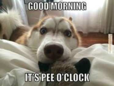 Meme with dog telling owners it's time to go potty. Potty train in one spot.