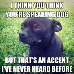 Image result for dog understands you meme