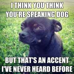 Image result for dog understands you meme