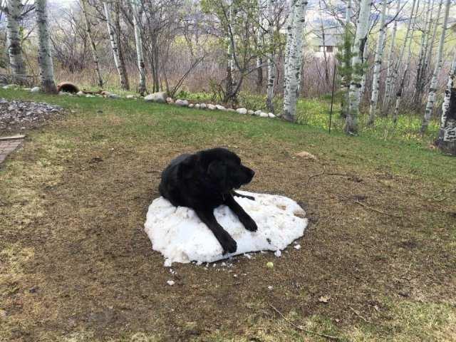 Snow Dog 8