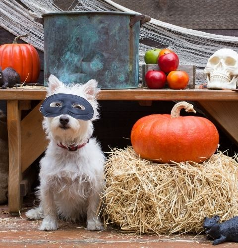 A dog is dressed up for his halloween party and ready to play some games!