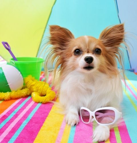 dog toys for summer to play with outdoor