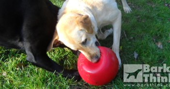 The best indestructible dog toys for aggressive chewers and destructive dogs. The list of durable toys includes KONGs, Nylabones, various reinforced plush toys, lasting rubber dog toys, and popular hard plastic dog toys.