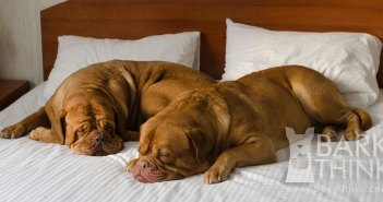 Does your dog sleep in the bed with you?