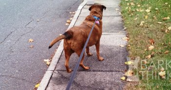 Retractable Dog Leashes Are Not That Bad. Rules to use retractable dog leashes successfully and the changing opinions of dog trainers in favor of retractable dog leashes such as Flexi Leashes.