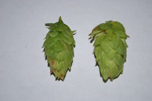 Cascade (left) and Nugget (Right) Cones