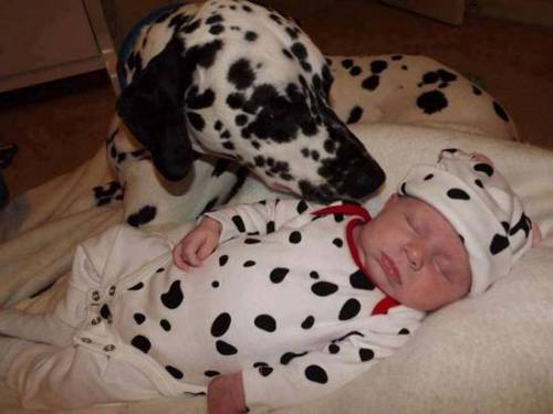 pictures-to-prove-babies-need-pets.2