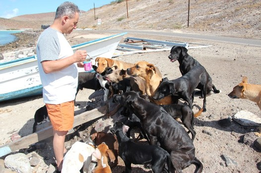 American couple holidaying in Mexico look after help 34 Homeless cats dogs.1
