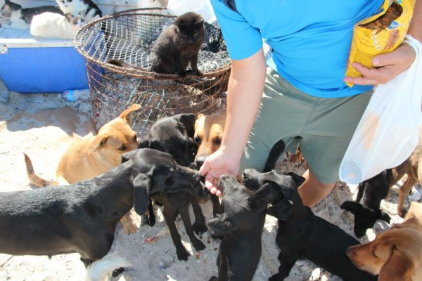 American couple holidaying in Mexico look after help 34 Homeless cats dogs.5