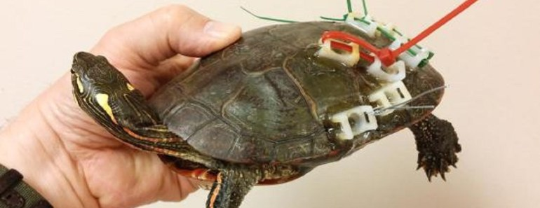 turtle shell repair