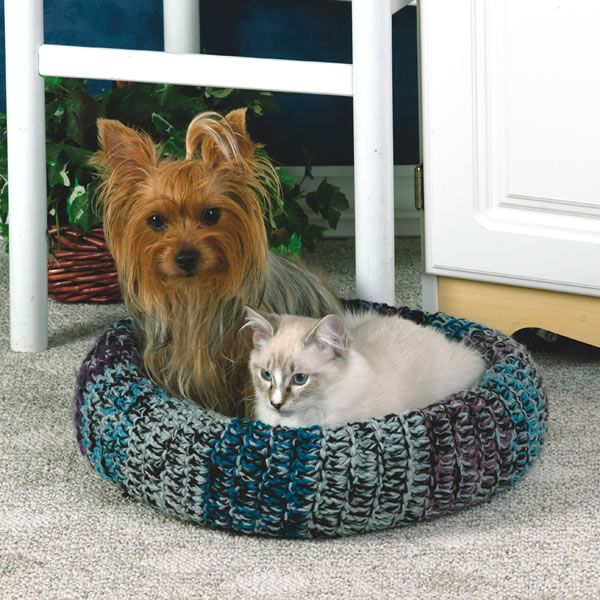 yorkie and cats 5