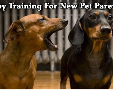 dog training for puppies
