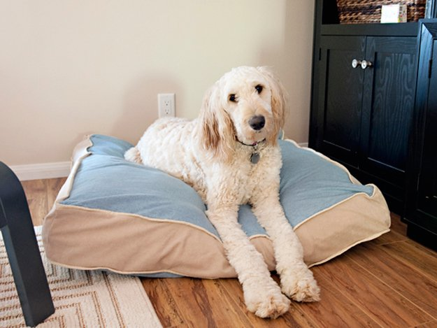 easy dog bed