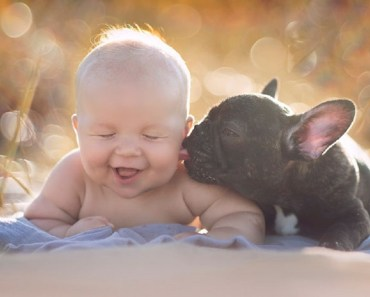 french bulldog cute