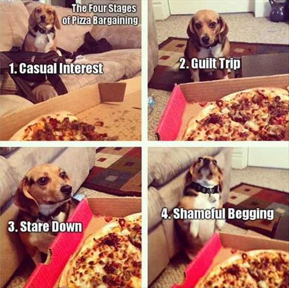 dogs and pizza 11
