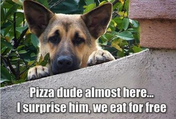 dog pizza plan