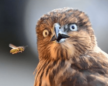 shocked owl
