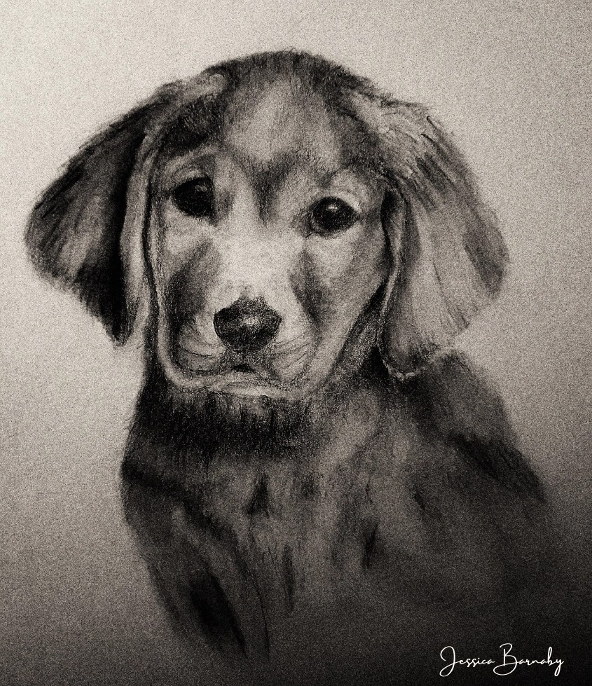 Charcoal Puppy Pet Portrait, Barnaby Studio by Jessica Barnaby