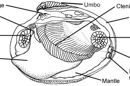 Interior Mussel Diagram Free Interior Design Mir Detok