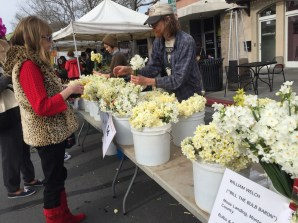 Flogging flowers, Campbell Farmers Market