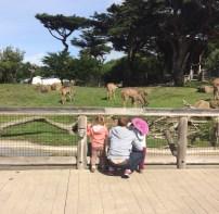 A cracking view at San Francisco Zoo.