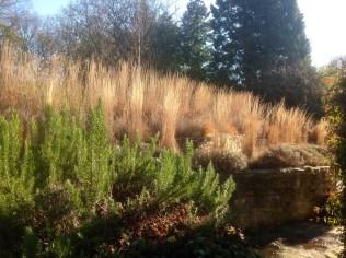 Winter grasses Terrace