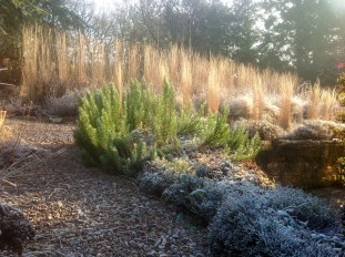 Barn House Garden Winter - Enter grasses terrace frost