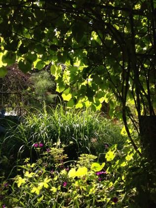 Spring summer miscanthus pergola vine backlit