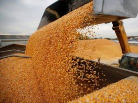 Bangladesh moves to burn grain for fuel