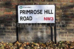 Primrose-hill-
