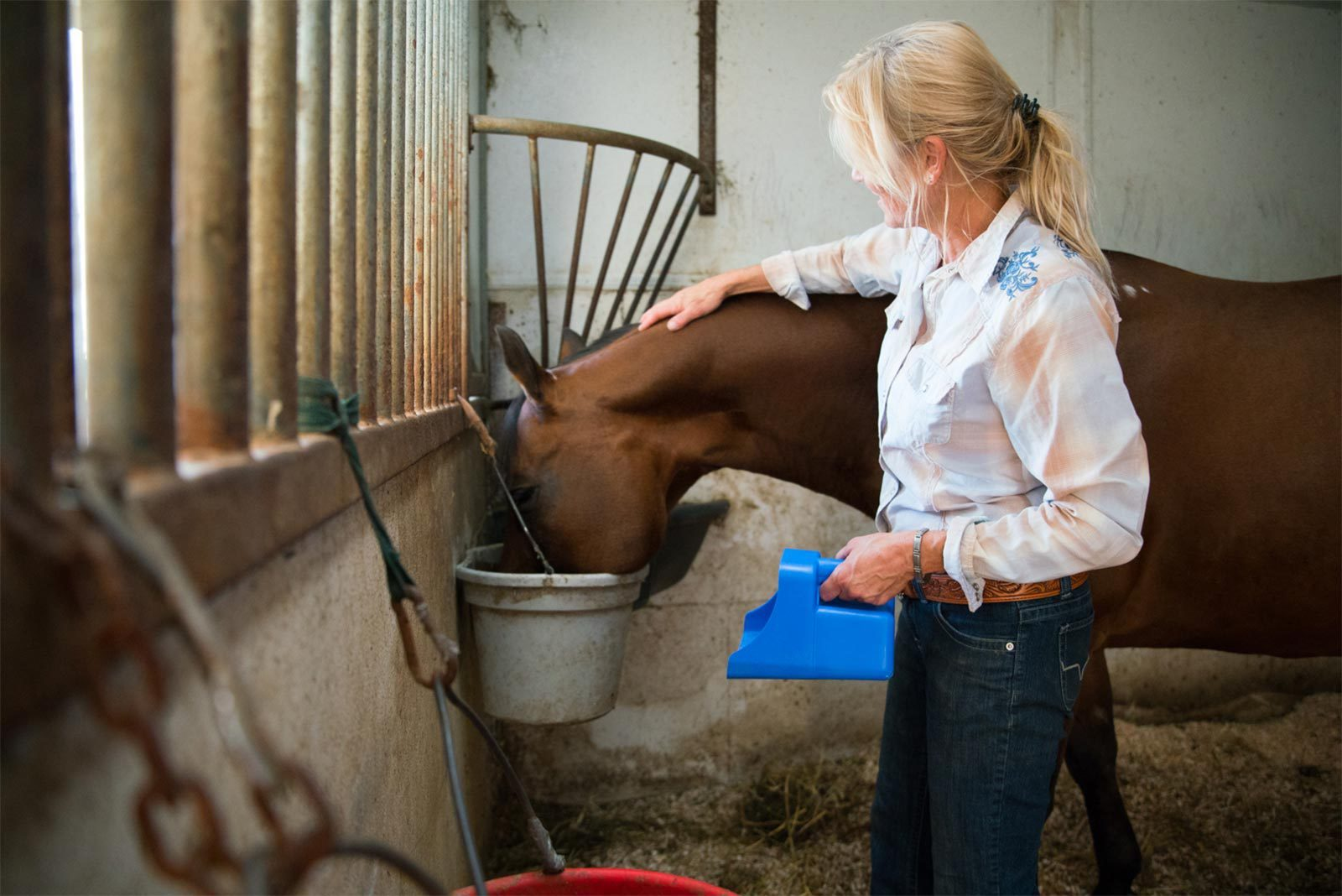 Understanding The Equine Digestive System