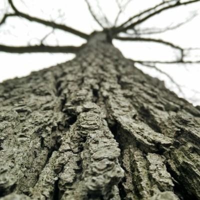 I Will Be Like A Tree