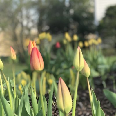 Spring Is A Time To Hope