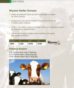 Beef feed infographic for Wynne e heifer grower