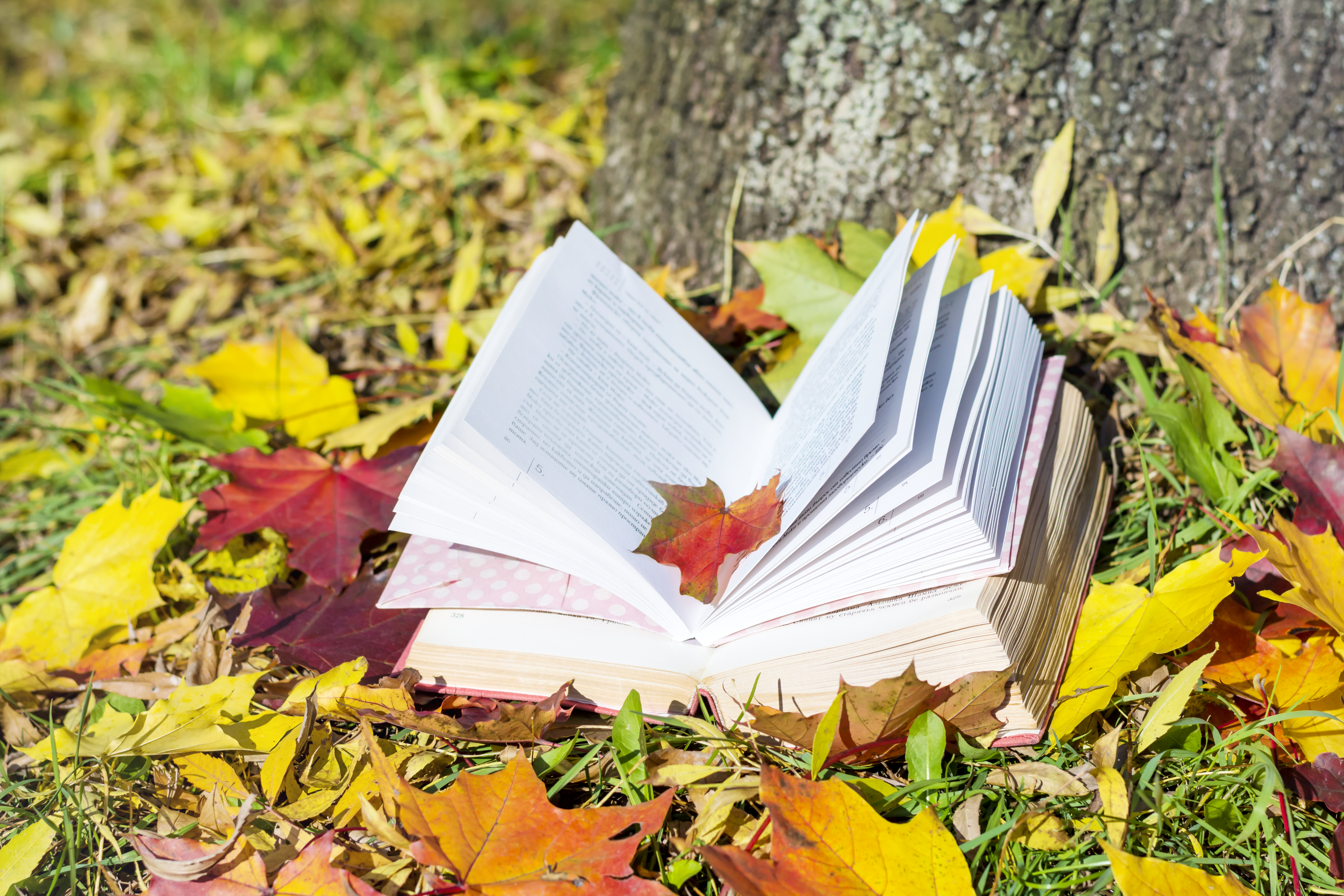 open book on autumn leaves and grass