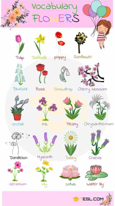 Flowers-vocabulary