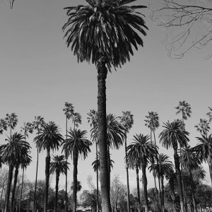 Las Palmas de Los Angeles