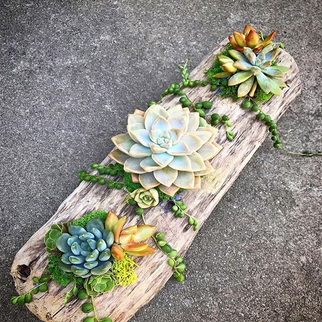 Succulents using natural objects
