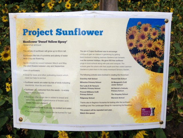 Sunflowers in the sensory garden, Jephson Park