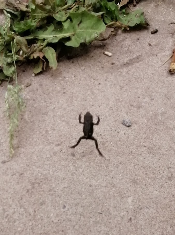 Tiny frog jumping