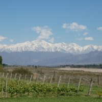 Achaval-Ferrer, a boutique winery in Lujan de Cuyo, Argentina