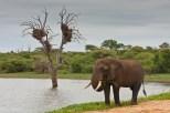 Elephant at Sunset Dam