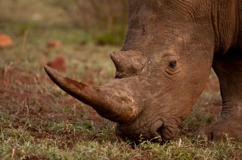 Muddy Rhino