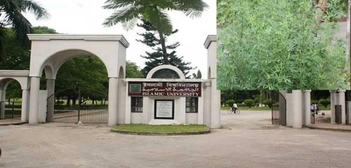 গাঁজায় ভরপুর যে বিশ্ববিদ্যালয় ক্যাম্পাস