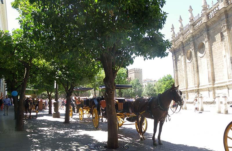 caballos catedral sevilla