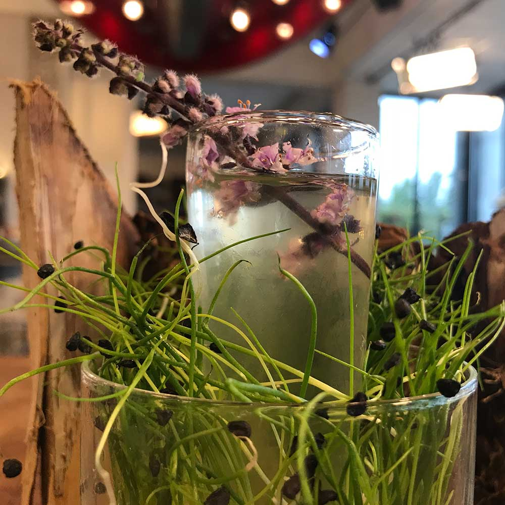 Cocktail Microherbs from Holland – Koppert Cress