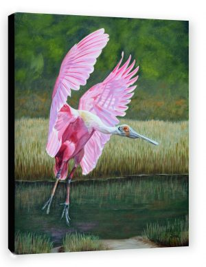 Spoonbill canvas perspective view DSC_7606