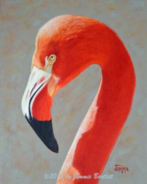 Flamingo Portrait WEB