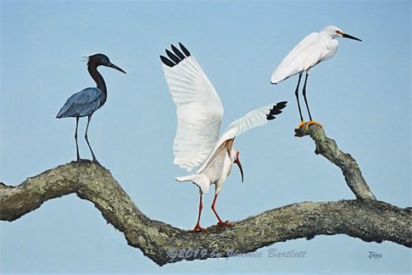 Birds Out on a Limb