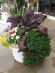 mustard red giant with thyme, sedum lemon ball, pansies and violas